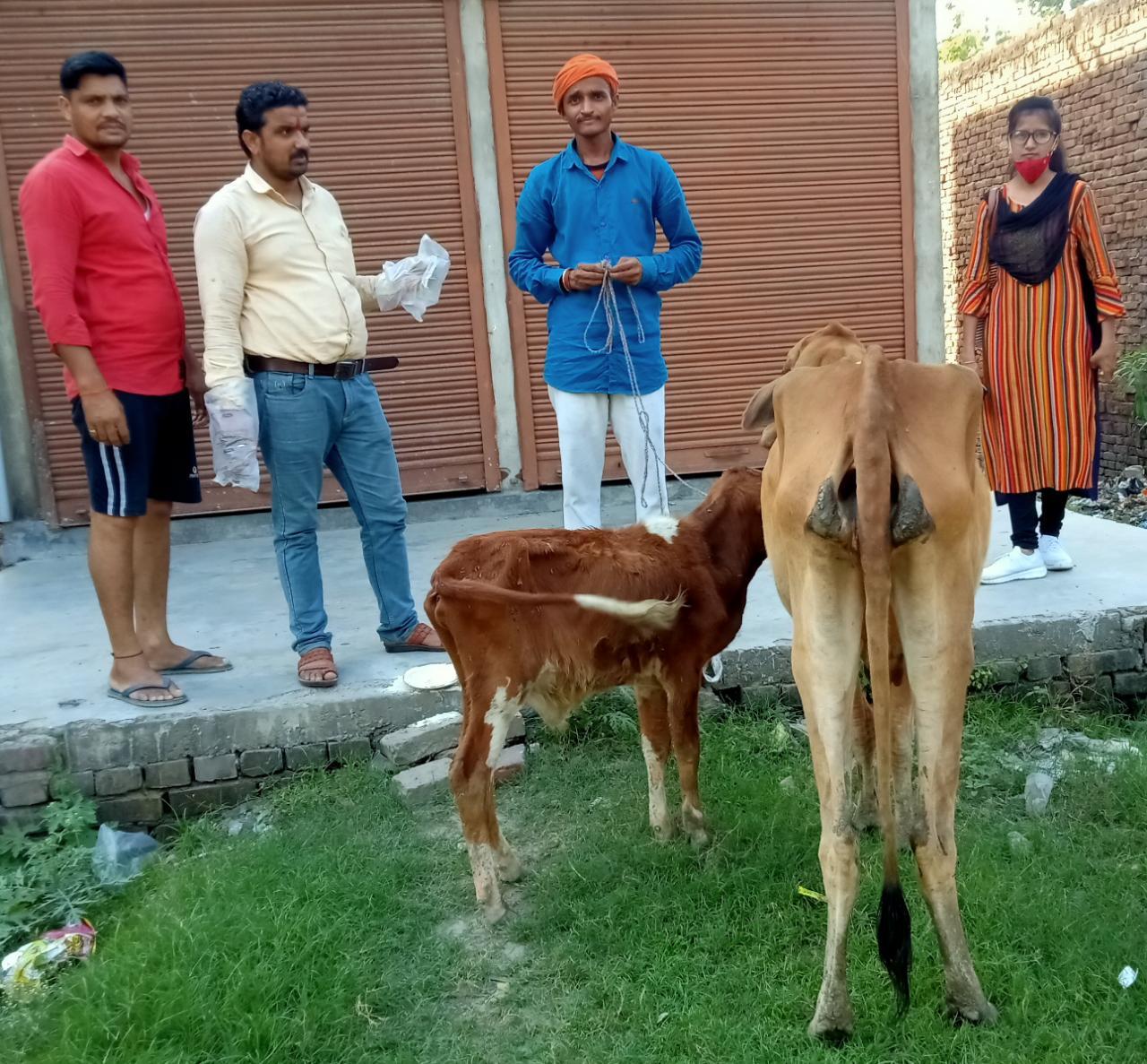 रवीन्द्र गुप्ता कमलापुरी व अध्यापिका पूजा शर्मा,ने छुट्टा जानवरों का इलाज करके पेश किया मानवता की मिसाल